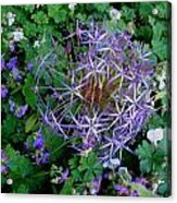 Purple Flower Sphere Acrylic Print