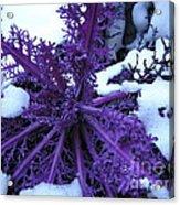 Purple Foliage In Winter Acrylic Print