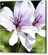 Purple Geranium Acrylic Print by Artist and Photographer Laura Wrede