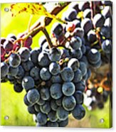 Purple Grapes Acrylic Print by Elena Elisseeva