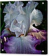 Purple Hues Acrylic Print