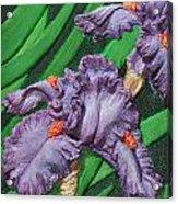 Purple Iris Flowers Sculpture Acrylic Print