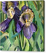 Purple Irises Acrylic Print by Mindy Newman