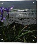 Purple Irises On Beach Acrylic Print