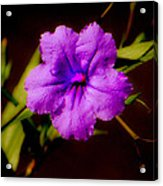 Purple Is The Color Acrylic Print