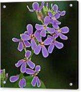 Purple Joy Acrylic Print