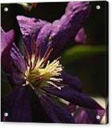 Purple Lady Acrylic Print