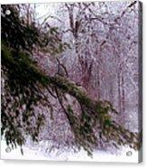 Purple Morning Frost Acrylic Print