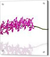 Purple Orchid Bunch Isolated Acrylic Print