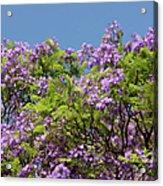 Purple Prelude Acrylic Print