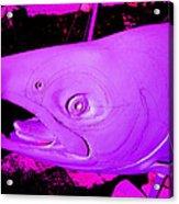 Purple Salmon Acrylic Print