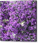 Purple Screen Square Acrylic Print