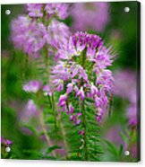 Purple Serenade Acrylic Print