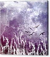 Purple Skies Acrylic Print