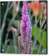 Purple Spear Acrylic Print