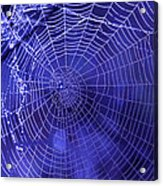 Purple Spiderweb Acrylic Print