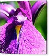Purple Vision Acrylic Print