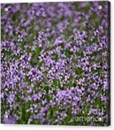 Purple Wildflowers Square Acrylic Print