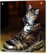 Puss In Boot Acrylic Print