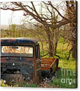 Put Out To Pasture2 Acrylic Print