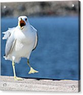 Putting His Foot Down Herring Gull Acrylic Print