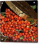 Pyracantha Berries Acrylic Print