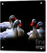 Quackery Quintet Acrylic Print