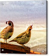 Quail And His Lady Acrylic Print