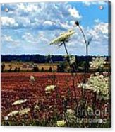 Queen Annes Lace And Hay Bales Acrylic Print