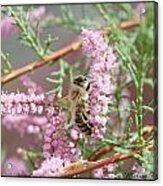 Queen Bee Acrylic Print