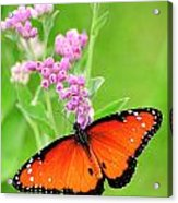 Queen Butterfly Wings With Pink Flowers Acrylic Print