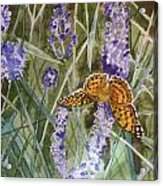 Queen Of Spain Fritillary And Lavender II Acrylic Print