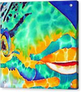 Queen Parrotfish Acrylic Print