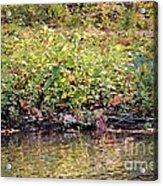 Quiet Moment Acrylic Print