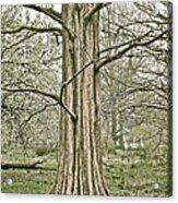 Quiet Tree Acrylic Print