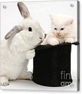 Rabbit And Kitten In Top Hat Acrylic Print