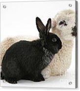 Rabbit And Lamb Acrylic Print