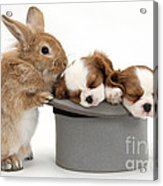 Rabbit And Spaniel Pups Acrylic Print
