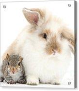 Rabbit And Squirrel Acrylic Print