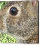 Rabbit Eye Acrylic Print
