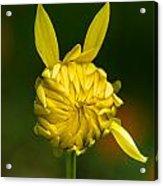 Rabbit Flower Acrylic Print