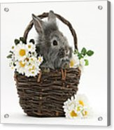 Rabbit In A Basket With Flowers Acrylic Print