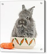 Rabbit In A Food Bowl With Carrot Acrylic Print