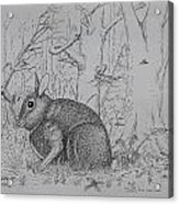 Rabbit In Woodland Acrylic Print