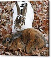 Rabbit Love Acrylic Print