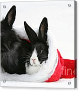 Rabbits In Hat Acrylic Print