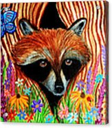 Raccoon And Butterfly Acrylic Print