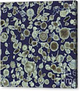 Radiolarian Ooze Lm Acrylic Print