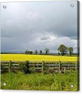 Rain Clouds Over Canola Field Acrylic Print