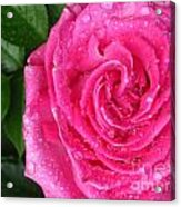 Rain Drenched Rose Acrylic Print